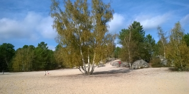 A picture from Fontainebleau by berg. steirer