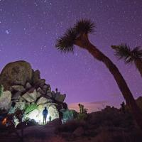 Joshua Tree by Vasque
