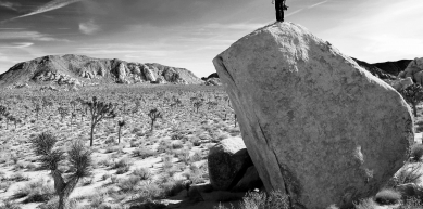 A picture from Joshua Tree by Beal