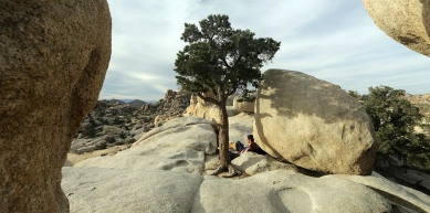 A picture from Joshua Tree by Romain Desgranges