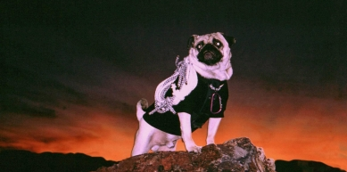 "A picture from Vinny's Photo from ""CLIMBING"" Magazine by Vinny the Pug"