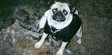 A picture from Mt. Camelback, The Base of by Vinny the Pug