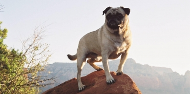 A picture from Vinny the Pug Upon Mt. Sedona by Vinny the Pug