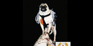 A picture from Camelback Mountain by Vinny the Pug