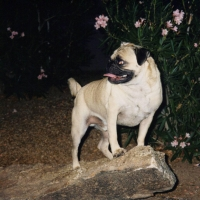 Crystall Point at Osborn and 12th Streets by Vinny the Pug