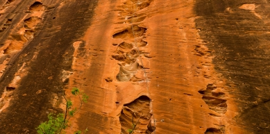 A picture from Zion National Park by Florent Vorger