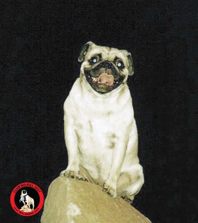 A picture from Once Upon A Rock at  Waikato by Vinny the Pug