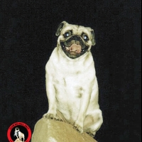 Once Upon A Rock at  Waikato by Vinny the Pug