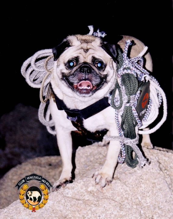 A picture from Dismounting Mount Sedona by Vinny the Pug