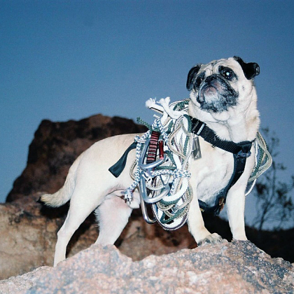 Vinny the Pug atop Mount Papago by Vinny the Pug