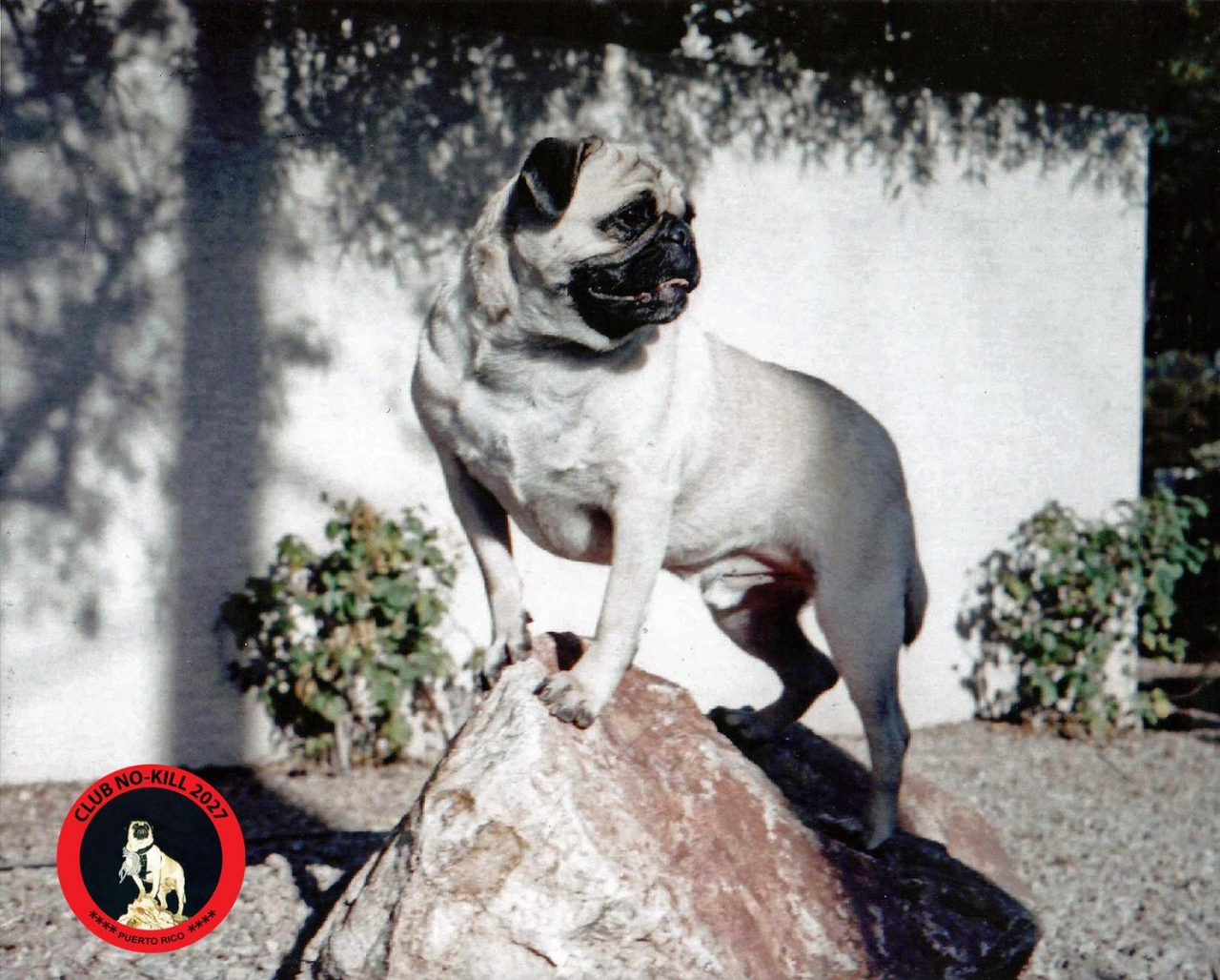 A picture from Training Rock, Phoenix by Vinny the Pug