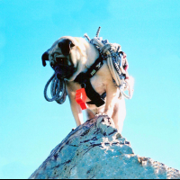 Vinny the Pug atop Mt. Camelback by Vinny the Pug