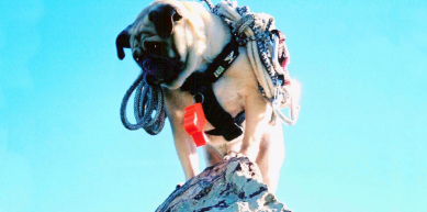 A picture from Vinny the Pug atop Mt. Camelback by Vinny the Pug