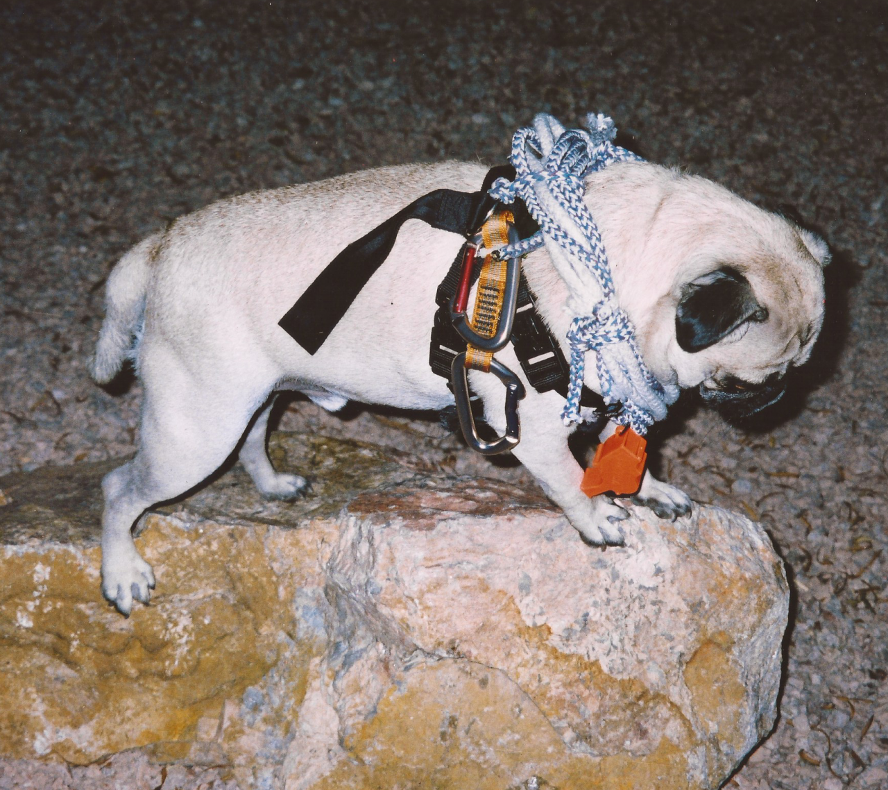 A picture from Phoenix Rock Gym - PRG by Vinny the Pug