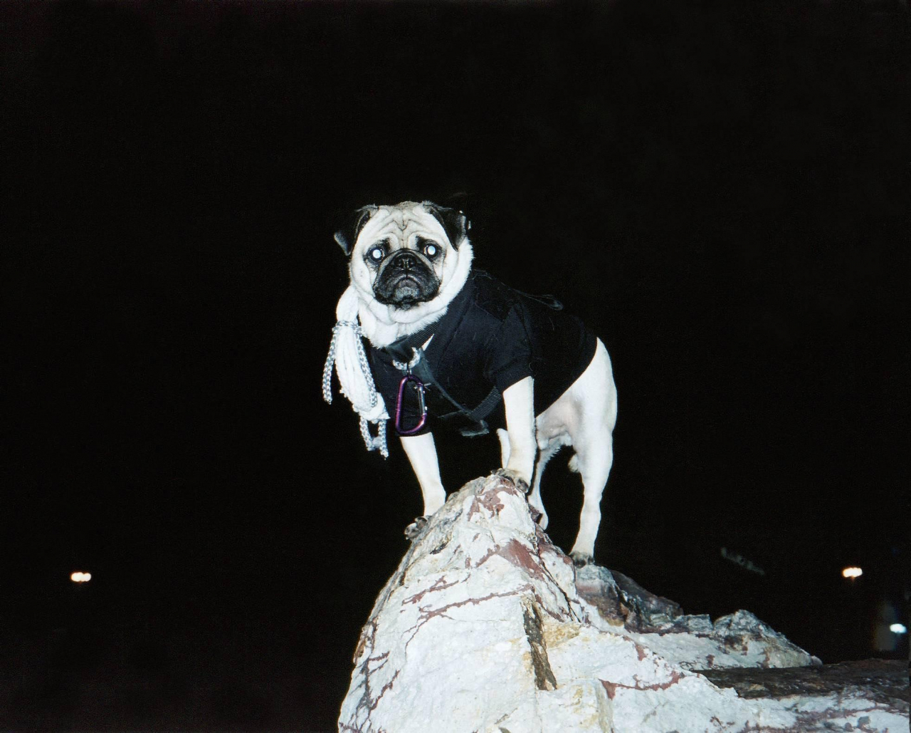 A picture from In the Heart of Phoenix by Vinny the Pug