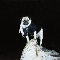 In the Heart of Phoenix by Vinny the Pug