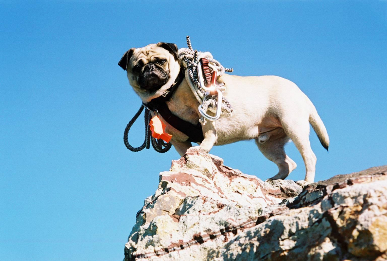 A picture from Vinny the Pug Camelback Mt. by Vinny the Pug