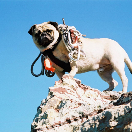Vinny the Pug Camelback Mt. by Vinny the Pug