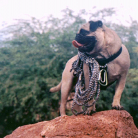 Mt. Papago by Vinny the Pug