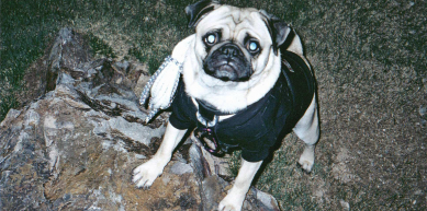"""A picture from Vinny's Photo from """"CLIMBING"""" Magazine by Vinny the Pug"""