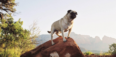 Story in Sedona by Vinny the Pug