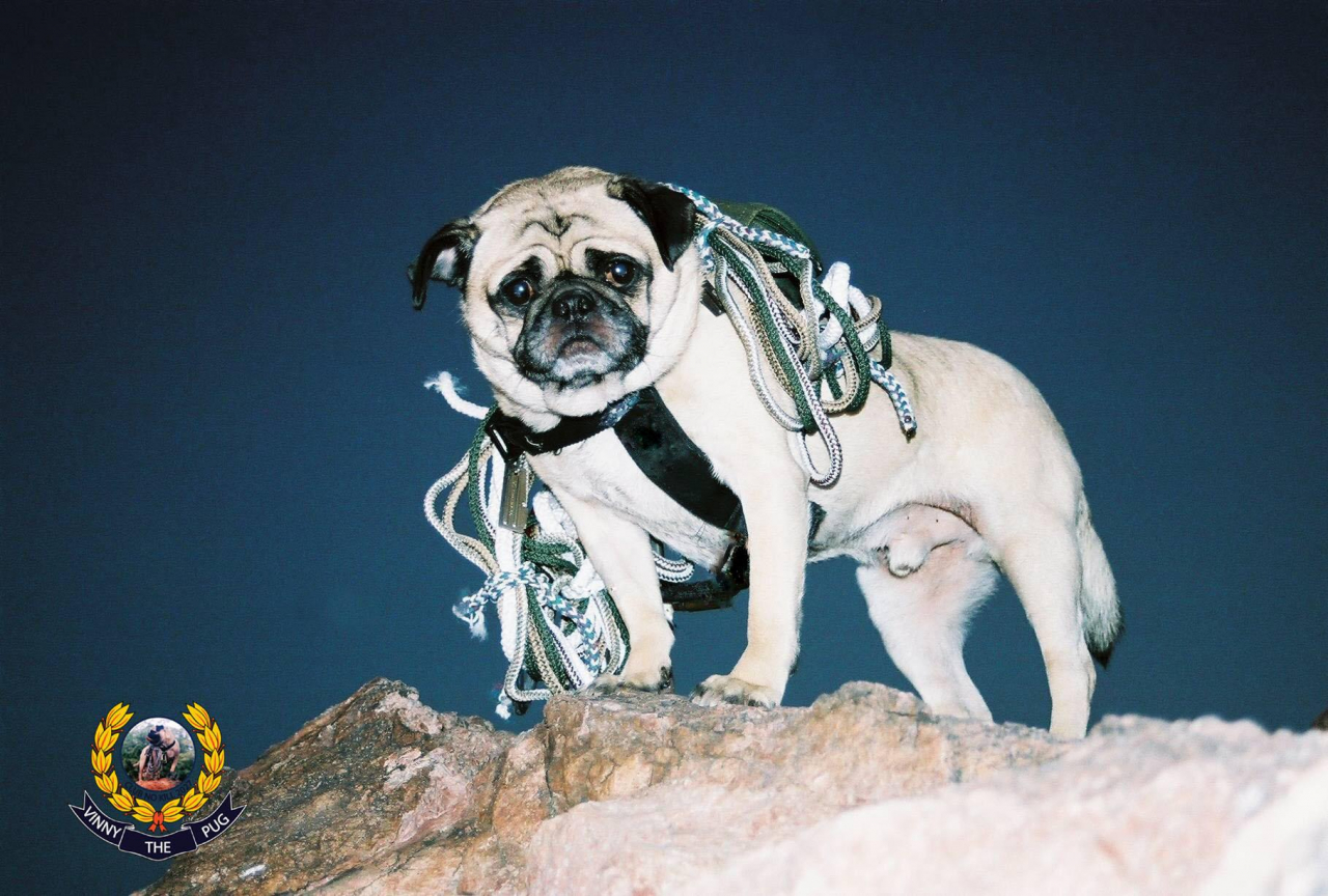 A picture from Mt. Camelback, Phoenix, Arizona by Vinny the Pug