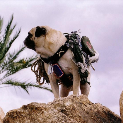 Vinny the Pug Upon Mt. Sedona by Vinny the Pug