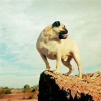 """Vinny's Photo from """"CLIMBING"""" Magazine by Vinny the Pug"""