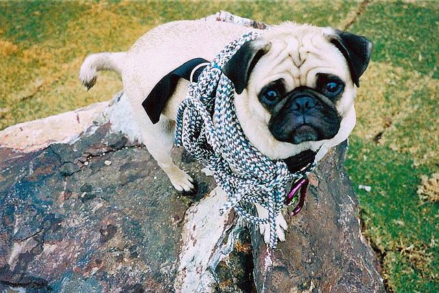 A picture from Mt. Camelback by Vinny the Pug