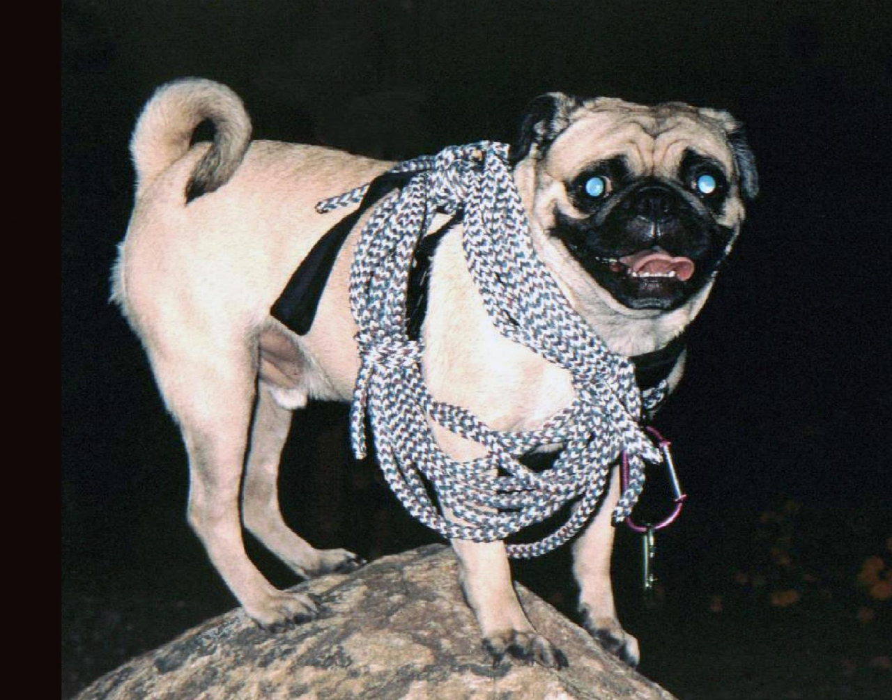 A picture from Vinny the Pug  at Camel Back Mountain by Vinny the Pug