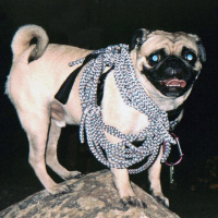 Vinny the Pug  at Camel Back Mountain by Vinny the Pug